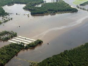 Agricultural waste spills into a North Carolina river during the flooding caused by Hurricane Florence